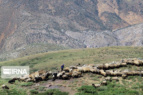 خبرنگاران 56 درصد از مساحت استان زنجان جزو اراضی ملی است